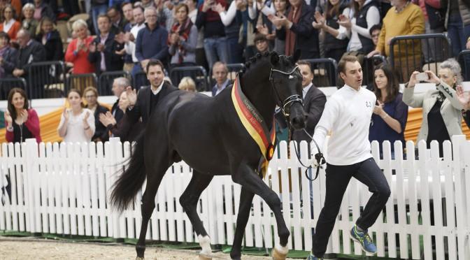Siegerhengst Perpignan Noir für 340.000 Euronach Österreich